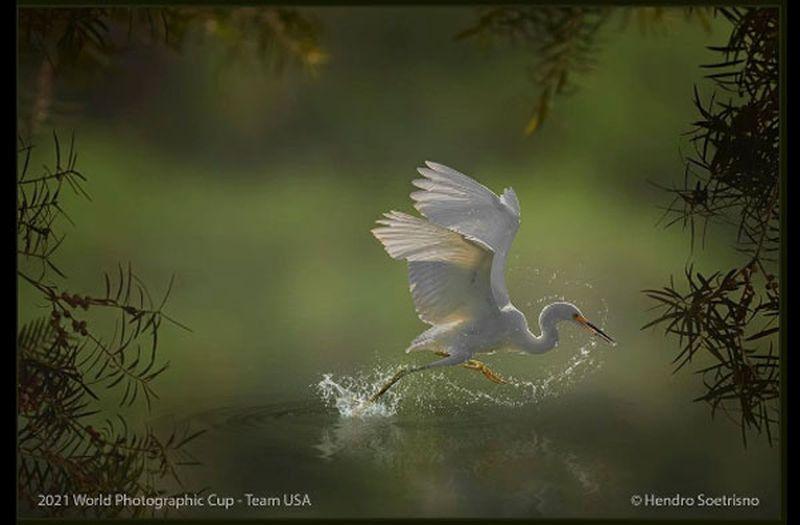 award winning bird photography crane by hendro soetrisno
