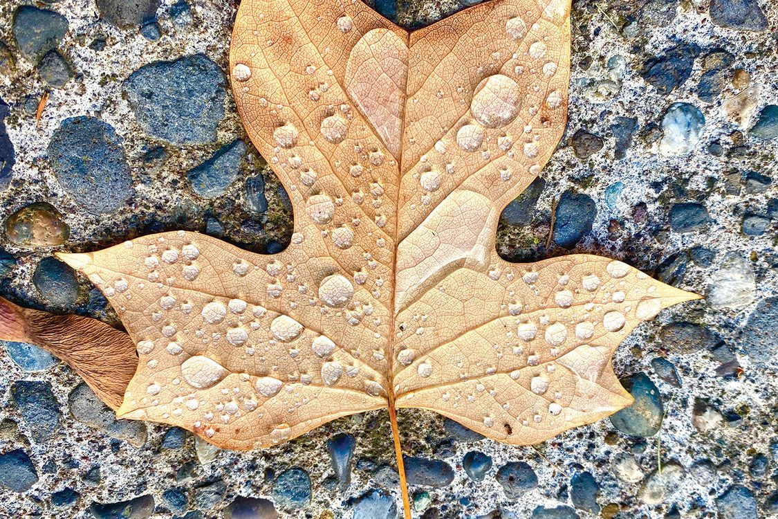 award winning nature photography dry leaf by monet hampson