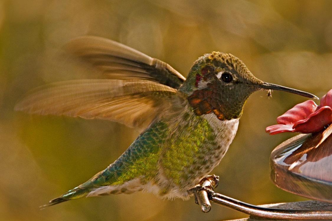 award winning bird photography humming bird by linda anne clare
