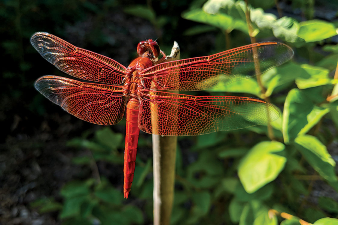 award winning photography dragonfly by michael weisman