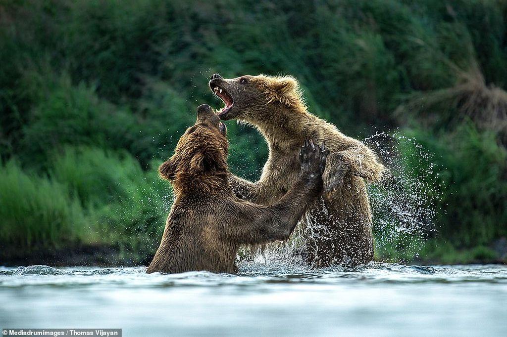award winning photography wildlife by thomas vijayan