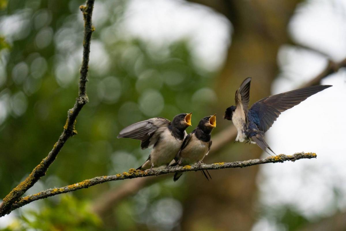 award winning bird photography feeding