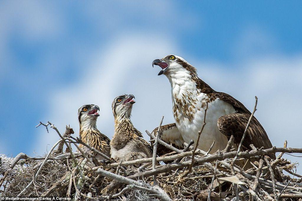 award winning photography birds by carlos carreno