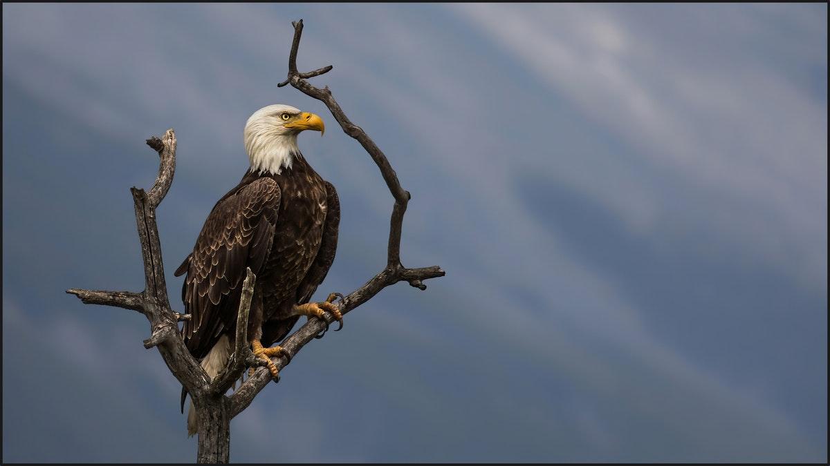 best wildlife bird photography eagle