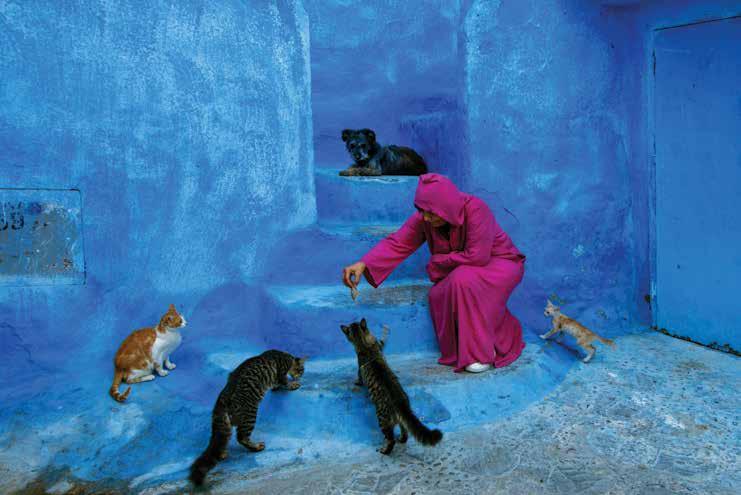 mental health exhibition photography feeding cats by kumral kepkep