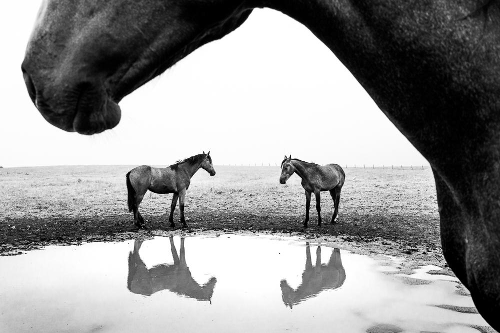 monochrome photography horse by tukasz kowalski
