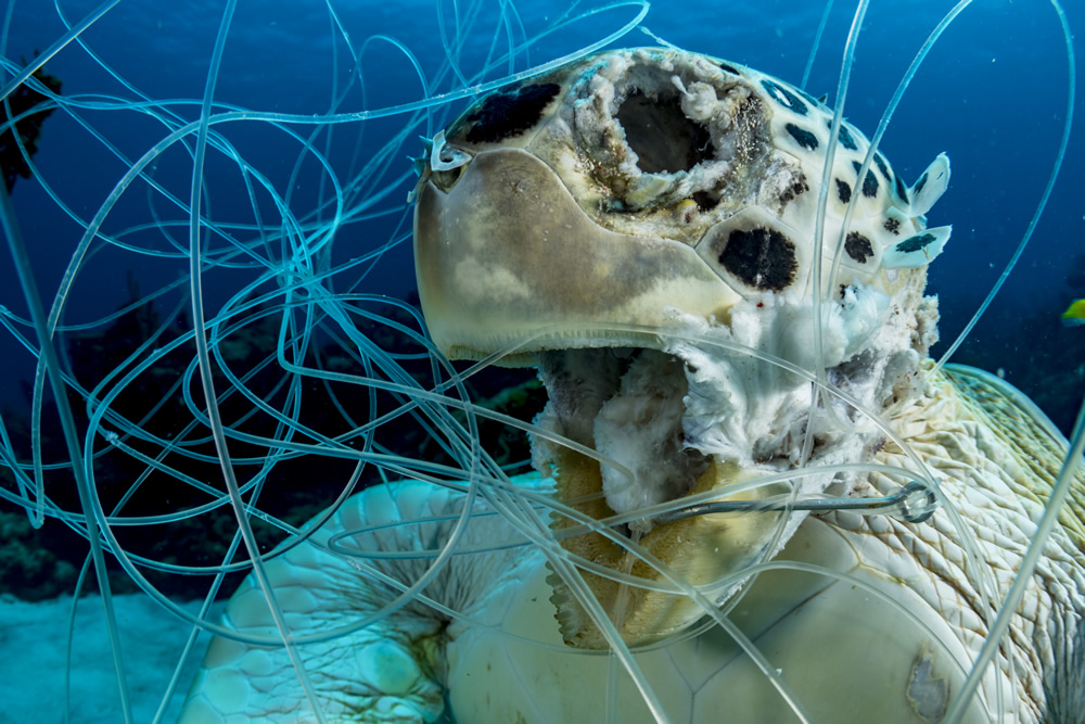 underwater photography dead turtle by shane gross