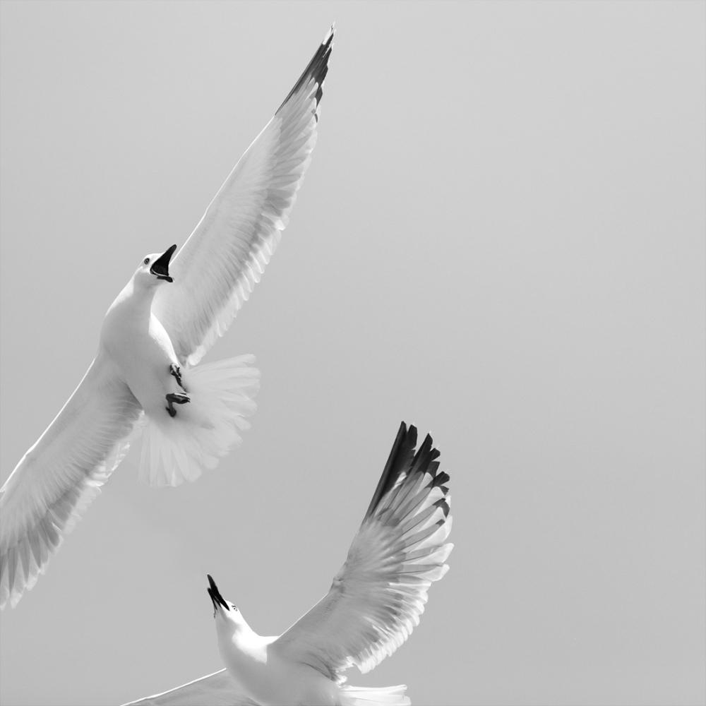 monochrome photography bird by patrick ems