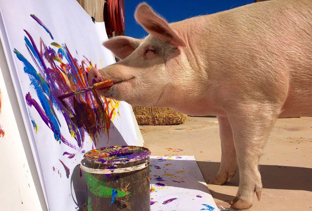 meet painter pigcasso