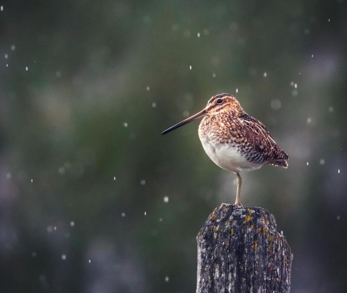 wildlife photography bird by jacquie matechuk