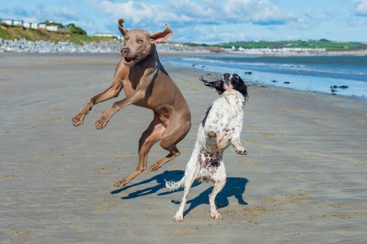 readers photography competition dancing dogs by mark leo